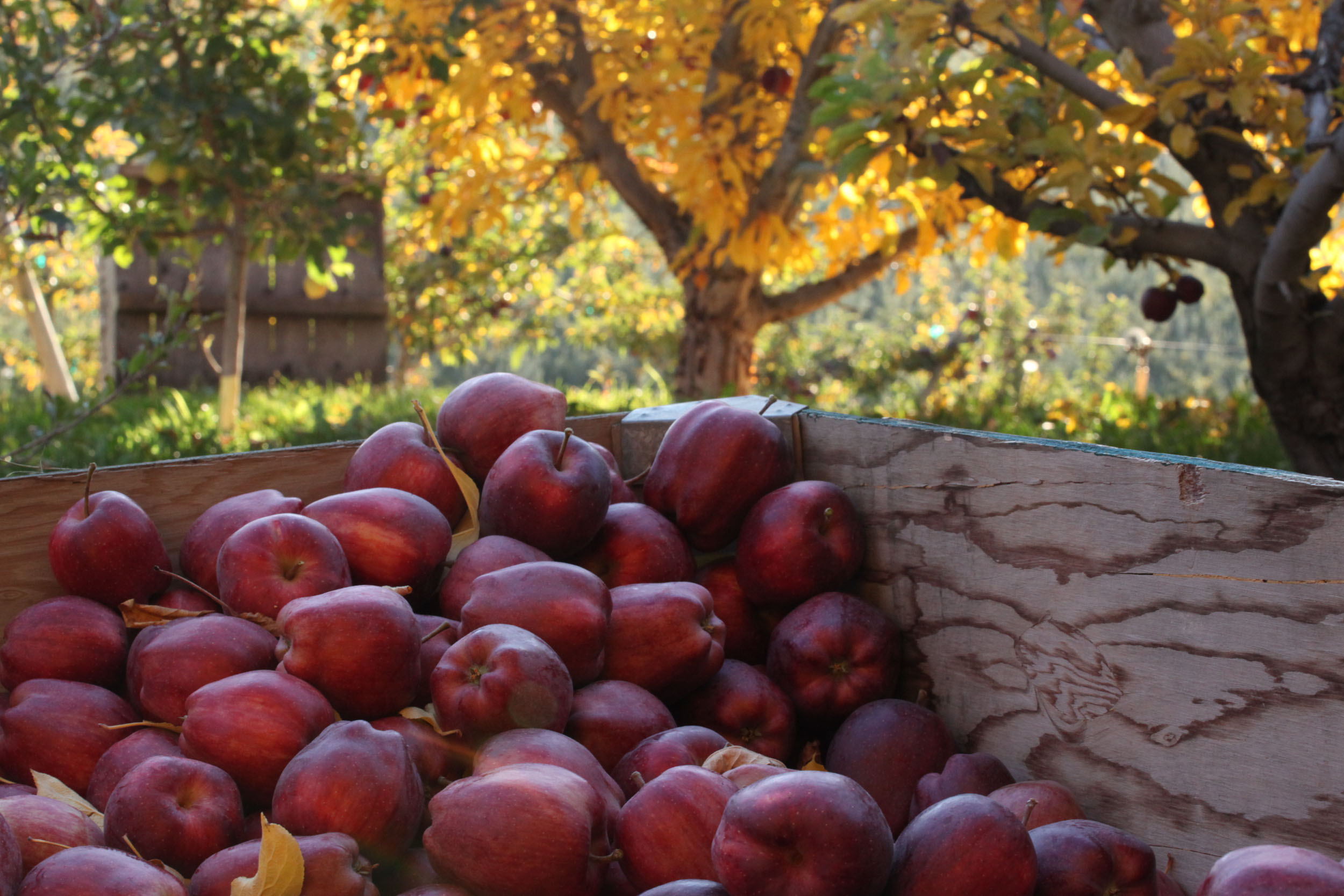 The Art of Fruit